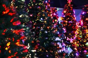 lit-christmas-trees